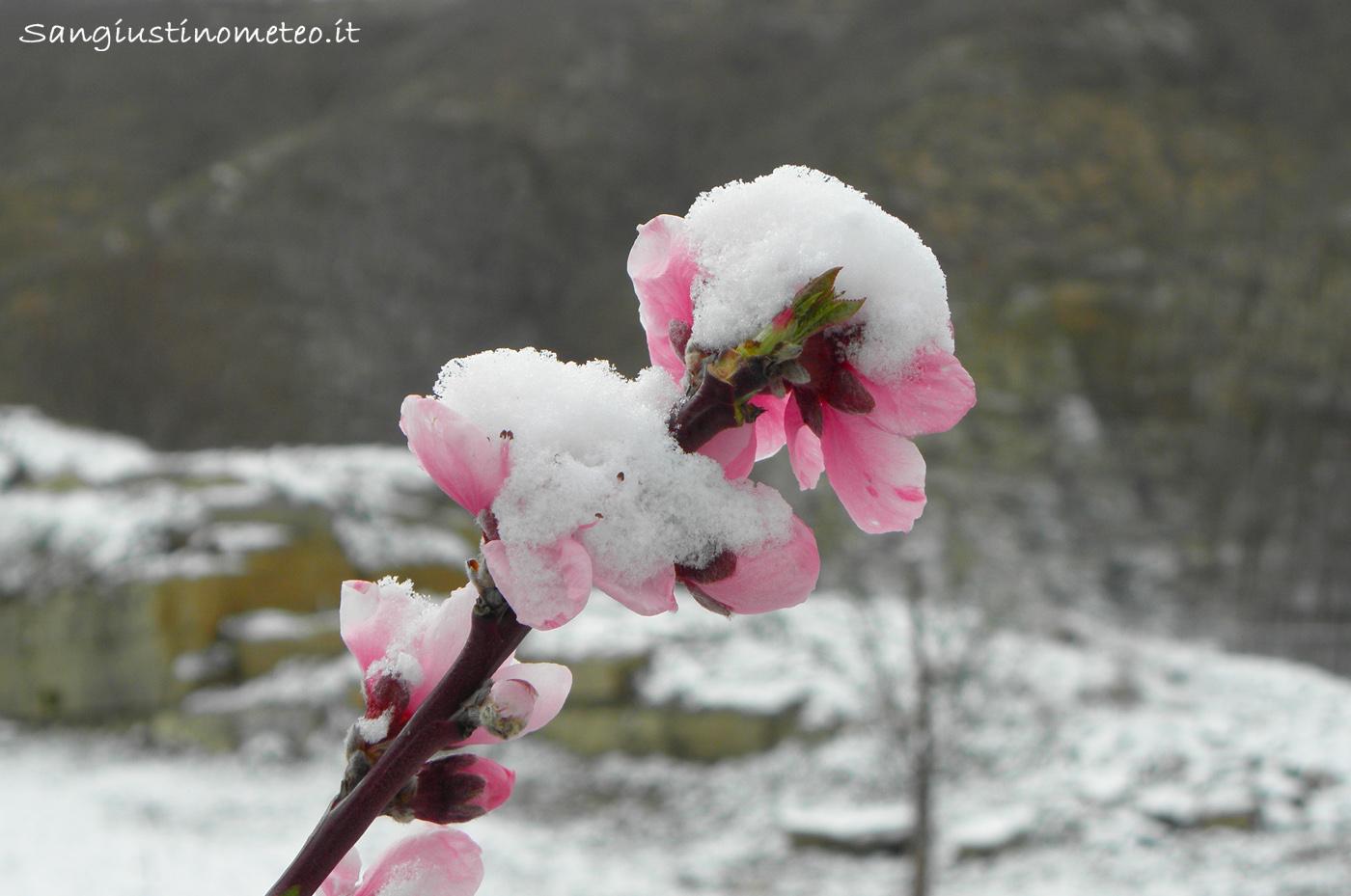 Neve 7 Aprile 2015 San Giustino pesco fiorito