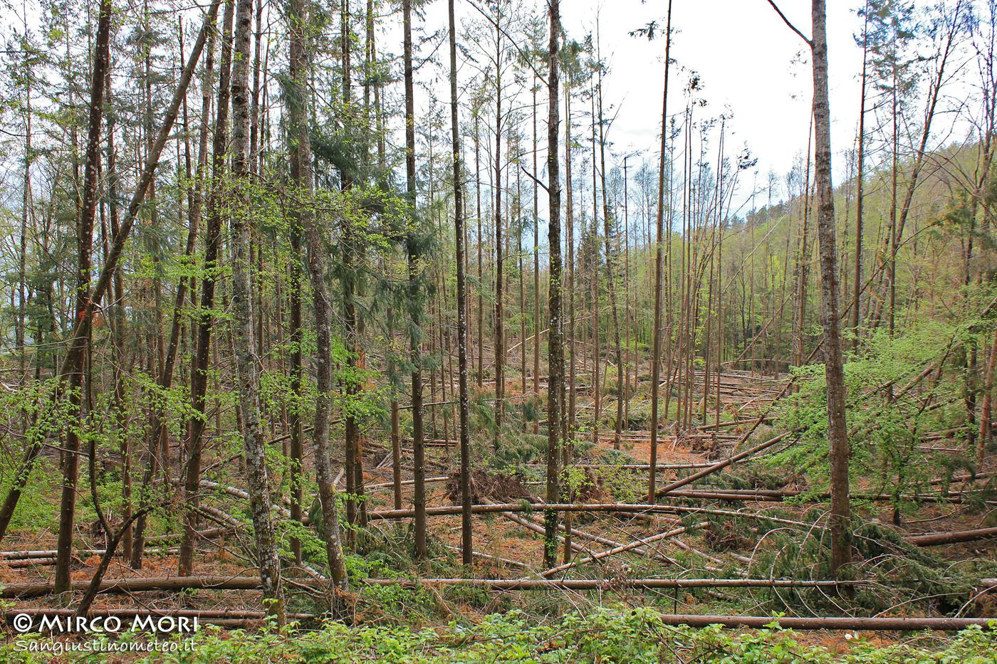 Tempesta vento 5 Marzo 2015 Sansepolcro sangiustinometeo