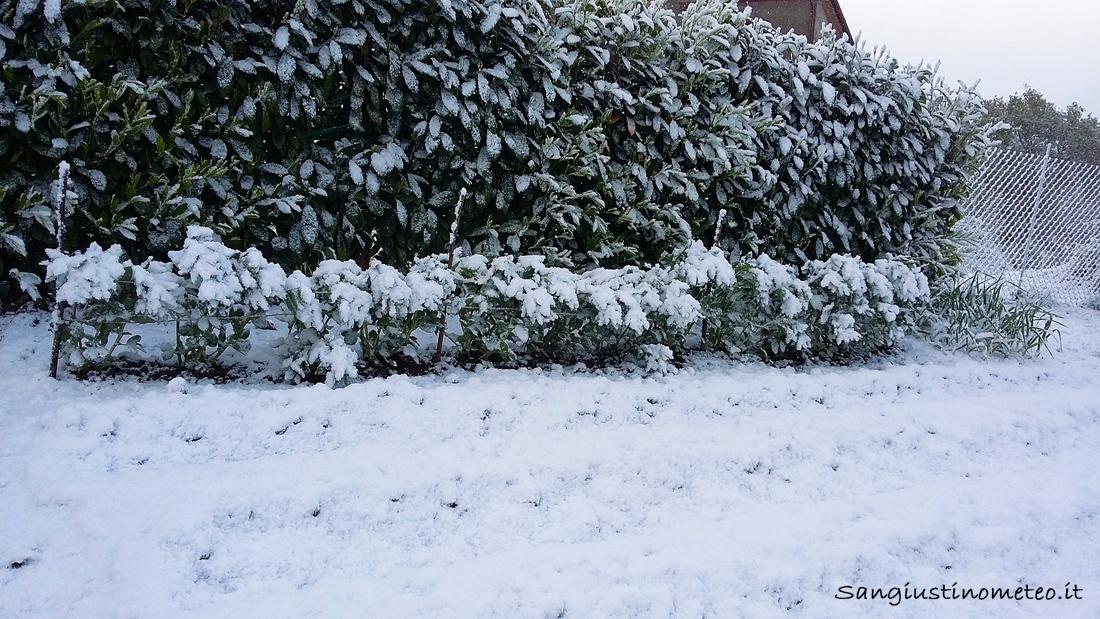 Fave ricoperte di neve